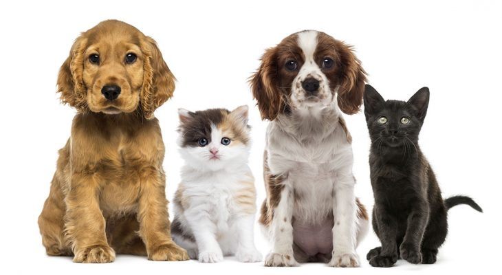 Become a pet sitter with a webcam